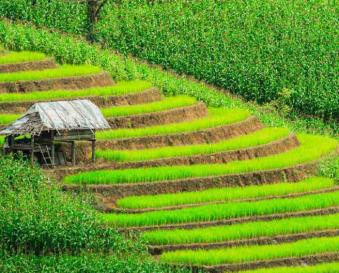 Thailandevo.com ou comment organiser son voyage au Thaïlande