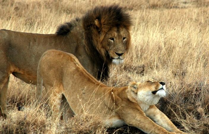Profiter du luxe en safari tanzanie